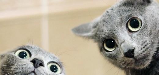 informacje o kotach