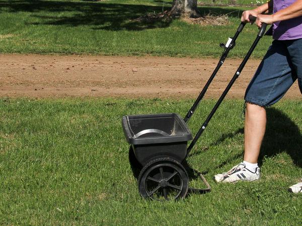 piaskowanie trawnika