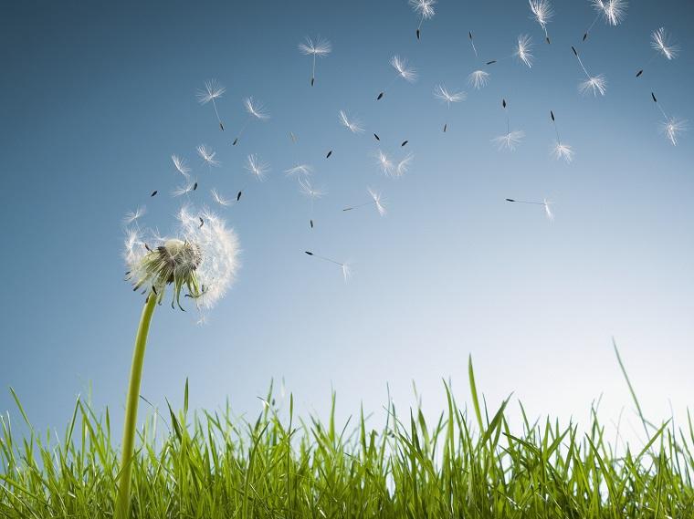 uczulenie na pyłki
